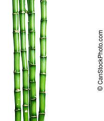bambus, na, biały