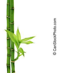 bambus, odizolowany, biały