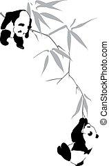 bambus, pandas, zweig