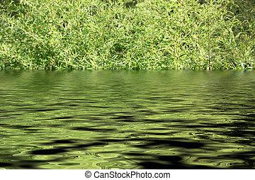 bambus, rośliny, w wodzie