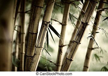 bambus, tło