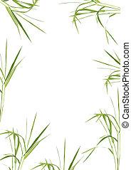 bambus, trawa, piękno