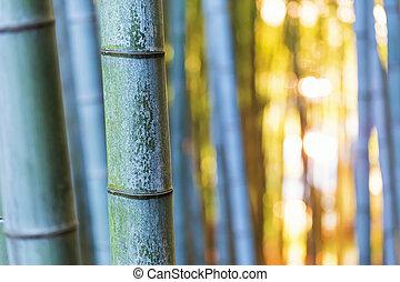 bambus, zachód słońca, las, nóżki