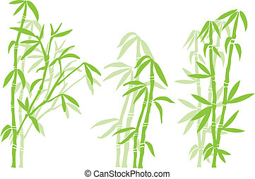 bambusowe drzewo