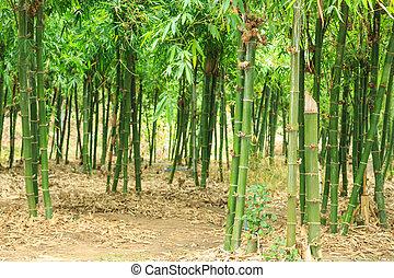 bambusowy las, wolny