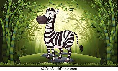 bambusowy las, zebra