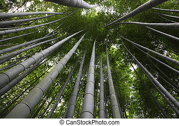 Kyoto Wald Arashiyama Japan Bambus Bezirk Kyoto Durch