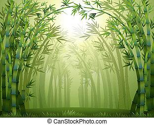 bambusz, belső, bitófák, erdő