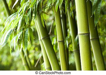 bambusz erdő, háttér