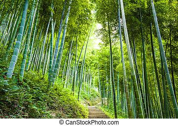 bambusz erdő, sétány