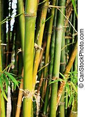 bambusz erdő, természet