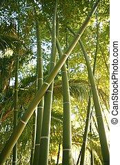 bambusz, sétabot, zöld gyarmat