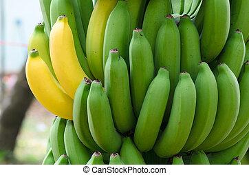 banánok, galore
