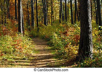 bana, in, höst skog