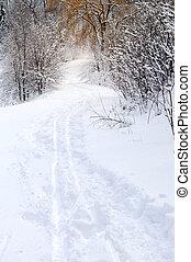 bana, in, vinter, skog