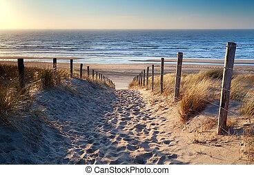 bana, till, norrhav, strand, in, guld, solsken