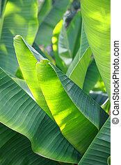 banaan blad