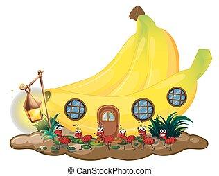 banan, dom, z, czerwony, mrówki, maszerować, zewnątrz
