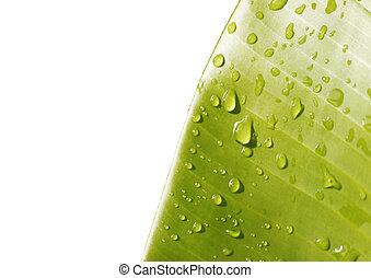 banan löv, med, vatten, droppar
