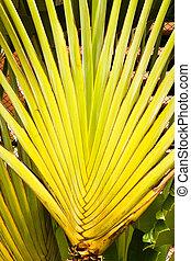 Banana fan leaves line.