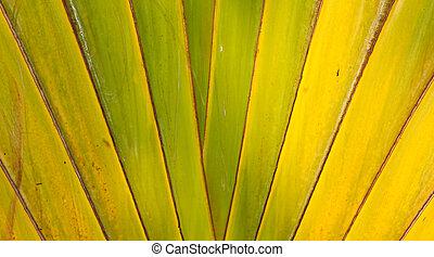 Banana Fan pattern