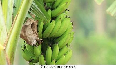 Banana In The Wind
