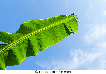 Banana lead on blue sky background
