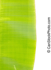 banana leaf background.