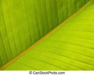 Banana Leaf Diagonal Pattern Close-up