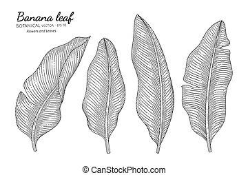 Banana leaf hand drawn botanical illustration with line art on white backgrounds.