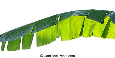 Banana leaf on white background