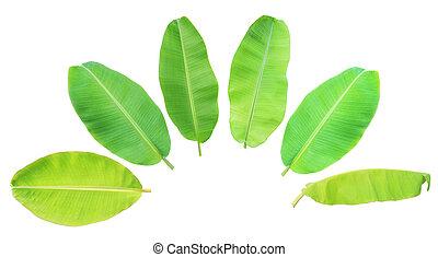 Banana leaf set isolated on white