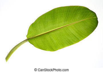 Banana leaf isolated on white