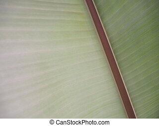 Banana leaf texture.