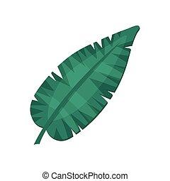 Banana leaf, tropical palm leaf vector Illustration