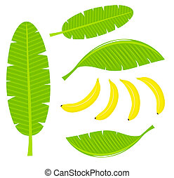 Banana leaves and fruits. Vector illustration
