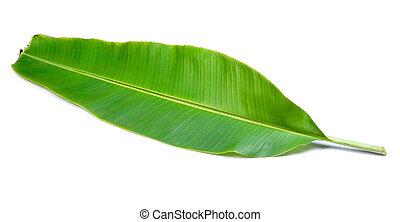 banana leaves on white background