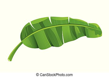 Banana leaves vector, isolated on white background