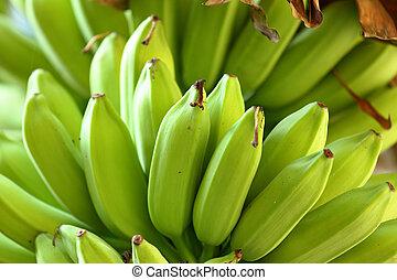 banana, ligado, árvore