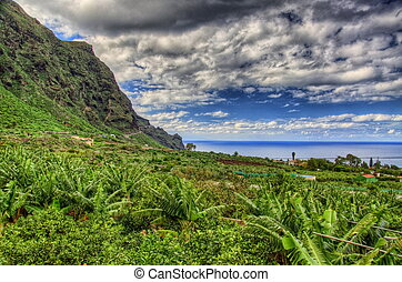 Banana palms plantation in north-west coast of Tenerife, Canarian Islands