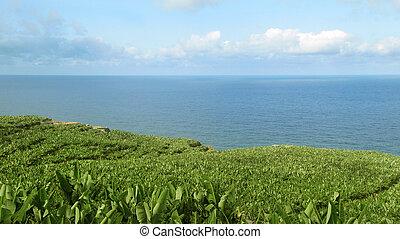 Banana plantation in Spain. Canary Island. La Palma