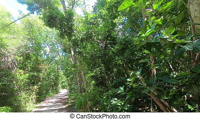 Banana Spider in Florida Keys - Summer 2020 Banana Spider in...