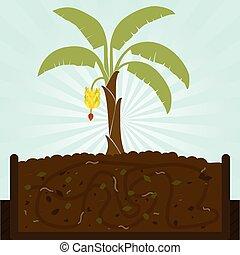 Banana tree and compost - Banana tree. Composting process...