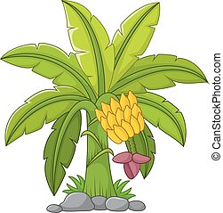 Banana tree on a white background - Vector illustration of...
