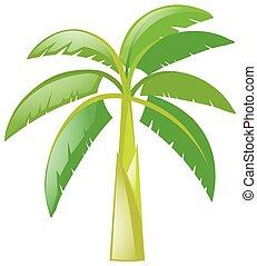 Banana tree on white background illustration