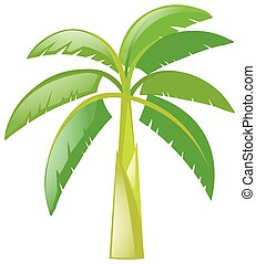Banana tree on white background