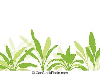 Banana tree, organic ecology background