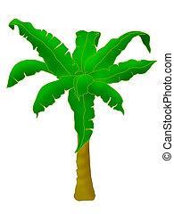 Plants - banana tree