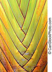 Banana tree texture