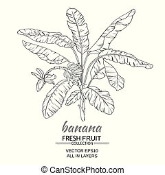 banana  tree vector illustration